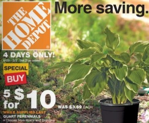 Home Depot Quart Perennials For Only 2 00 4 Day Living Rich With Coupons