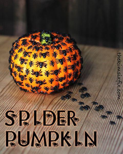 Spider Pumpkin 3fa82150c5248167dfd0846201fdde6a