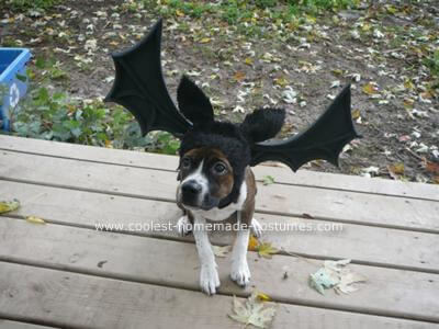 xcoolest-homemade-bat-dog-costume-30-21299900.jpg.pagespeed.ic.UyOInsfU83