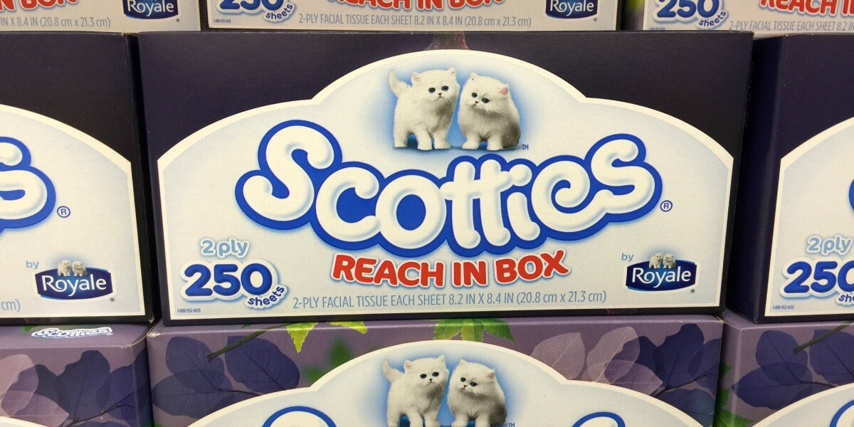 the facial tissue giants Here is another awesome freebie deal, just in time for the cold weather get free kleenex facial tissues plus moneymaker at giant starting 11/18.