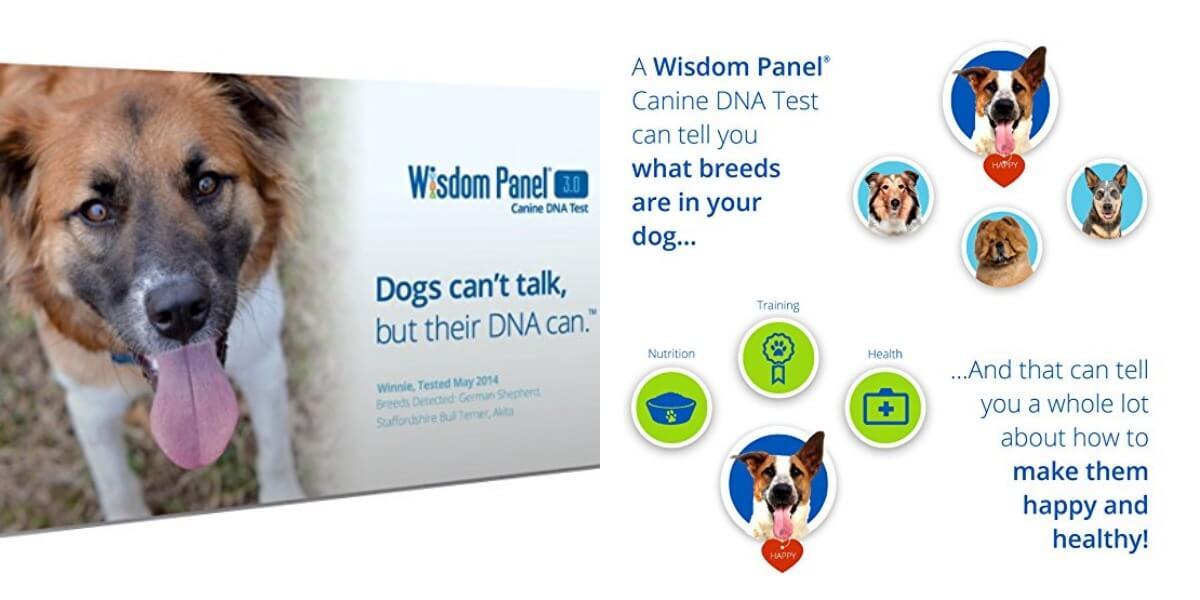 mars veterinary wisdom panel 3 0 breed identification dna test kit reg free. Black Bedroom Furniture Sets. Home Design Ideas