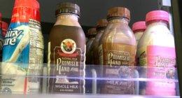 FREE Promised Land Single Serve Chocolate Milk at ShopRite!