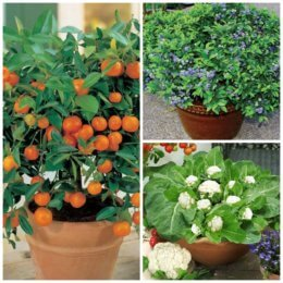 20 Fruits and Vegetables You Can Grow in Pots