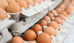 Over 200 Million Eggs Recalled Due to the Possibility of Salmonella