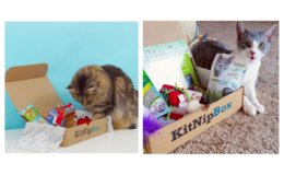 KitNipBox - Monthly Cat Subscription Box - Half Price!
