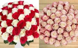 Pre-Order 50 Stem Roses Just $39.99+ Free Shipping at Costco
