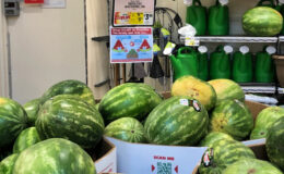 Whole Seedless Watermelon Just $2.99 at ShopRite!
