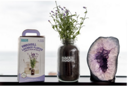 Back to the Roots Lavender or Tomato Windowsill Planter | $10 off Ibotta at Target & Walmart